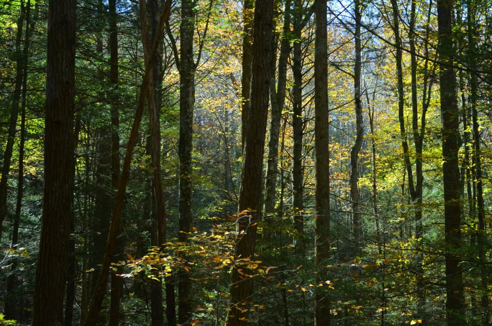 a state forest essay Essays from bookrags provide great ideas for temperate coniferous forests essays and paper topics like essay view this student essay about temperate coniferous forests.