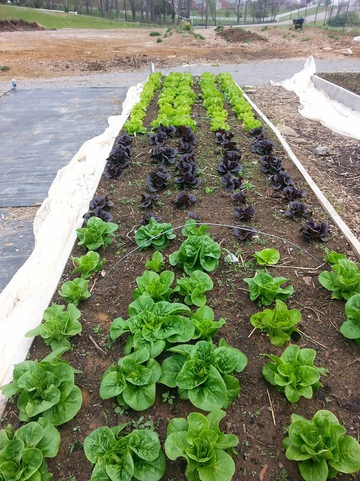 SSA News: Asbury Community Garden Feeds Both Students and Knowledge