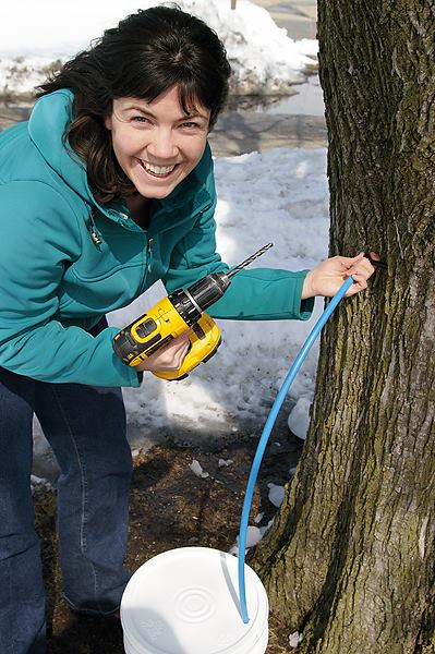 SSA News: AMBS Students Harvest Maple Syrup from Campus Trees