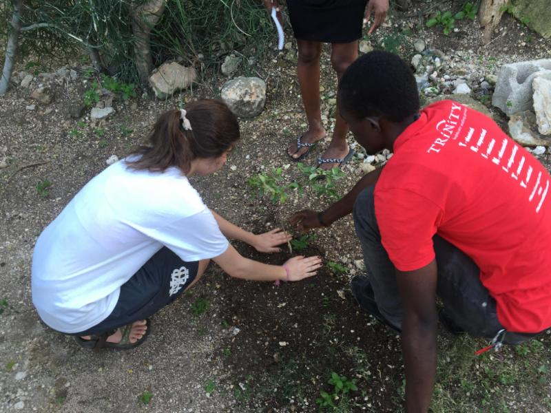 Blessed Earth Tennessee Plants Literal and Spiritual Trees in Haiti