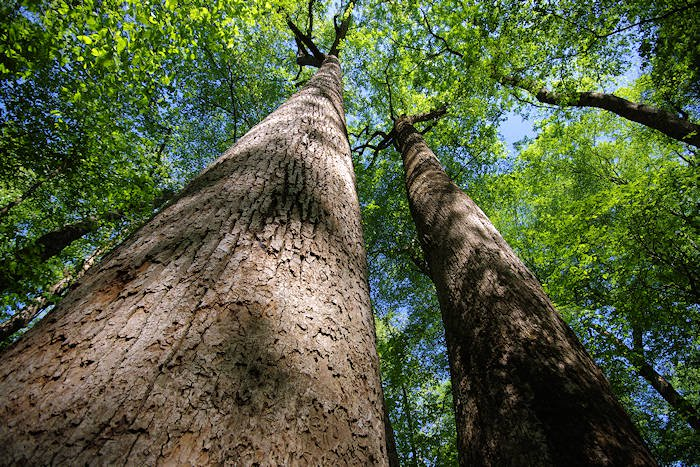 Trees Teach Us Great Lessons About Faith
